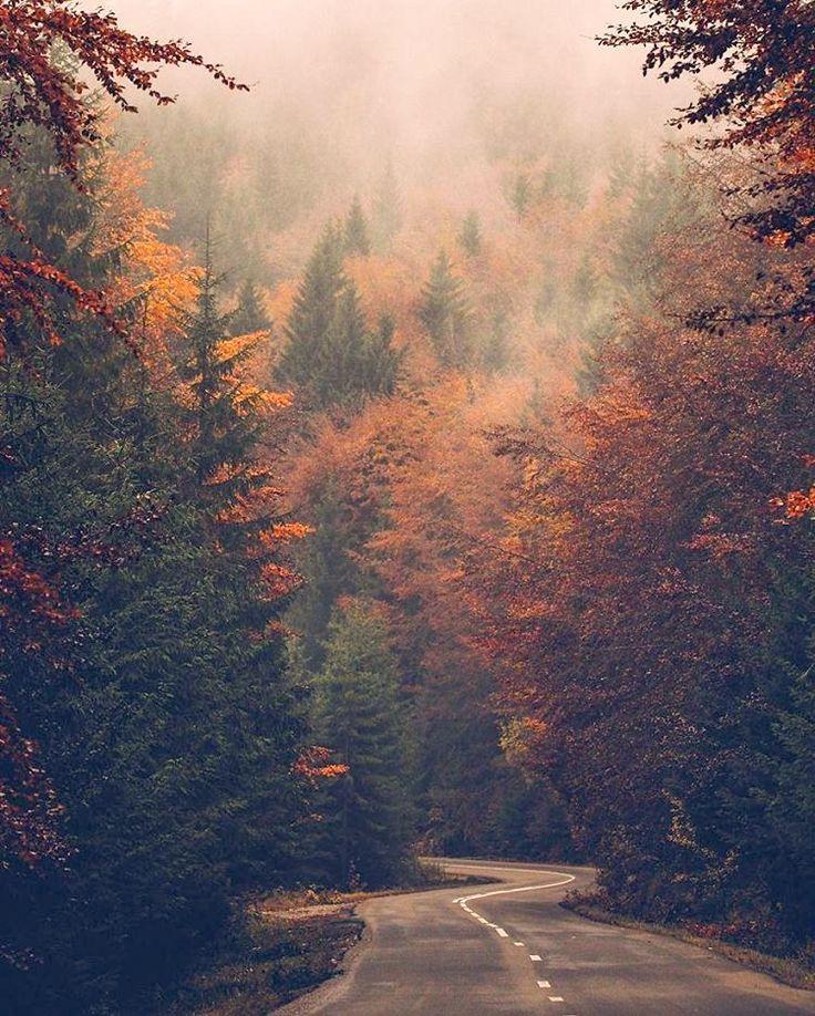 Misty autumn road (Romania) by LoveLetters (@loveletters.gr)