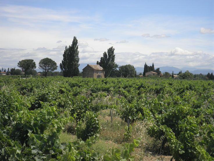 à Sainte Cecile les Vignes