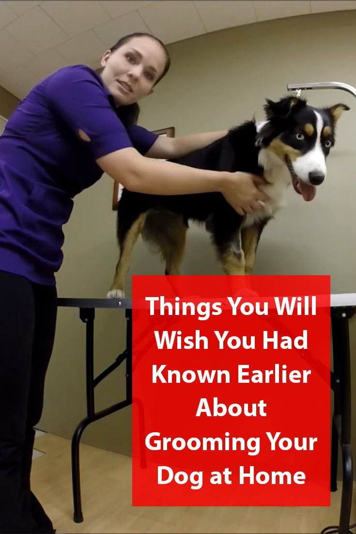 How To Groom Your Dog At Home Dogs Dog Grooming Dog Care