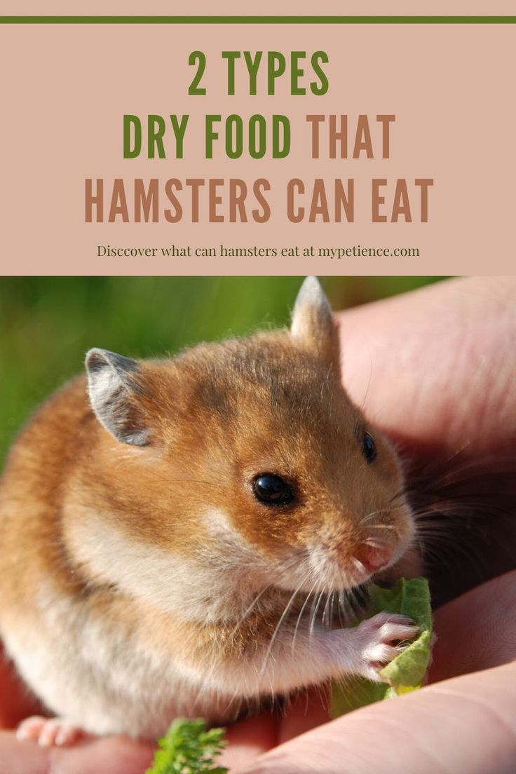 24cbfc092bfffbad0b89ccbc9134e11f - How To Get Food Out Of Hamster S Cheeks