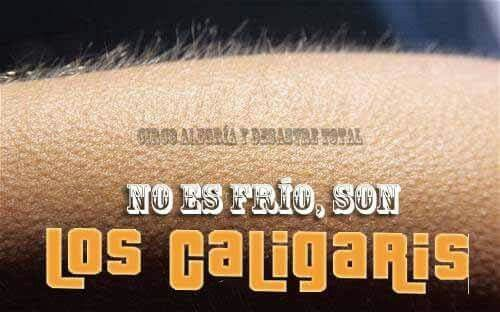 Los caligaris Papáaa