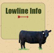 Lowline Cattle Information
