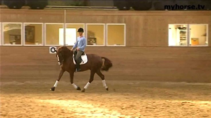 Changes in pace Dressage video