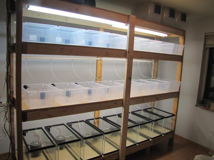 fish breeding setup - guppy breeding