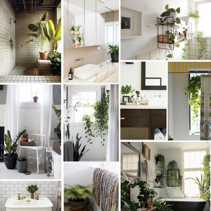 29 best bathrooms: plant life images on pinterest | bathroom ideas