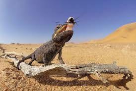 Fauna en el desierto. En el desierto de Namibia los animales son estrategas de supervivencia. Publicado por Ana Maria Boscovich ...