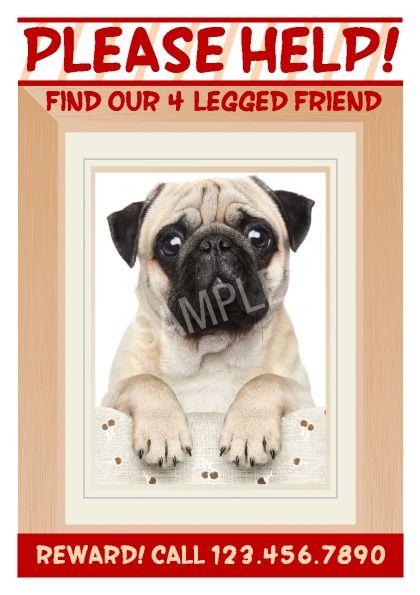 Doc671855 Lost Dog Flyer Template Word Create Flyer 65 – Lost Pet Flyer Maker
