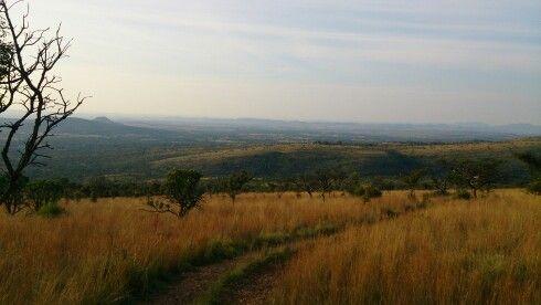 SA bushveld