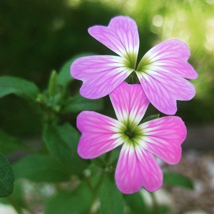 tolles winterfeste gartenblumen die die kalte gut uberstehen meisten abbild oder cefbcafcabe
