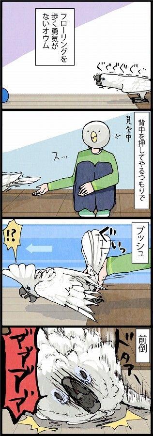 漫画「いたずらオウムの生活雑記」 (53) オウムが床を歩くのを応援したんだが…   ライフスタイル   マイナビニュース