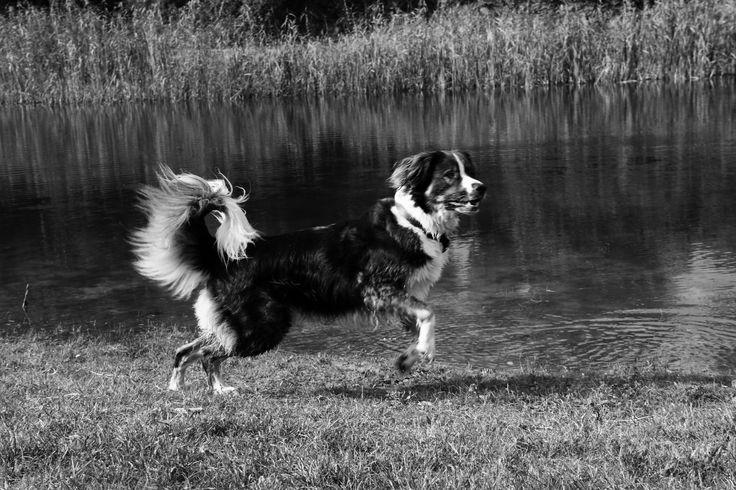 Playing@park #koningbinc #dogmodel #dog #animal