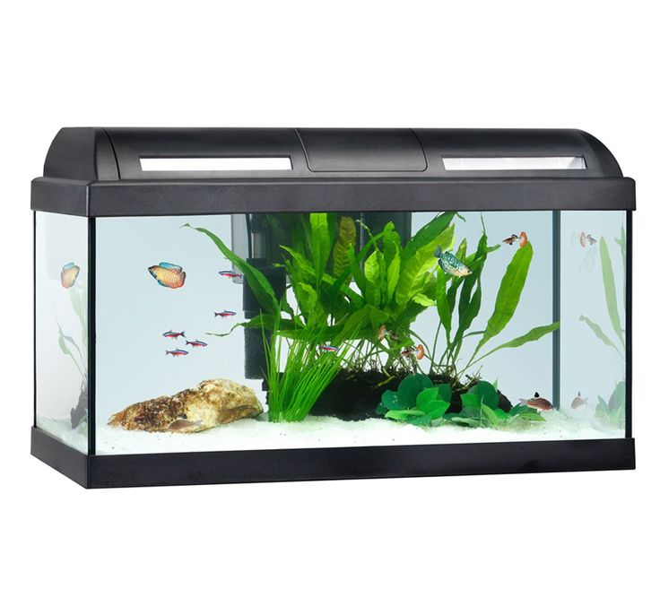 17 Best Images About Project Fish Tank On Pinterest: 17 Best Ideas About Tropical Aquarium On Pinterest