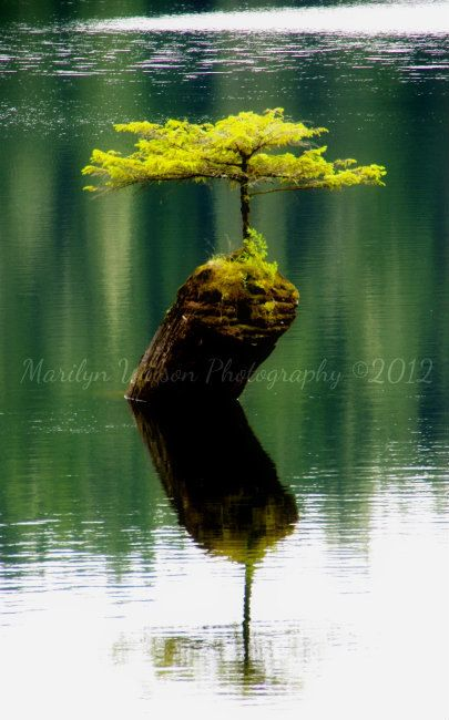 Nature landscape photography, Canadian landscape, tree, lake, water, green, reflections, Fairy Lake - 8 x 12