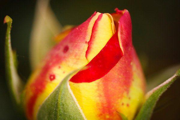 The Wonderful World of Macro Lenses: Close-Up Photography Lesson #4
