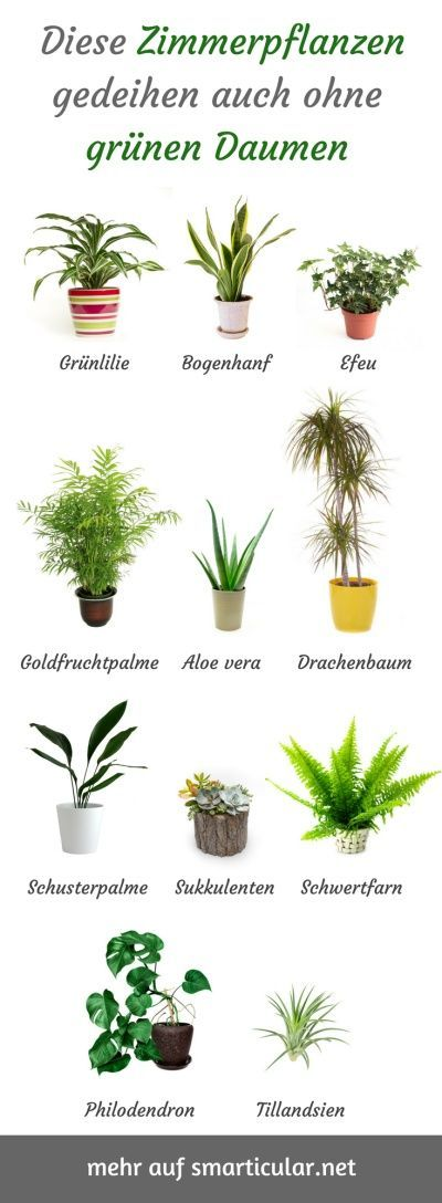 For all without green thumbs: robust, easy-care indoor plants