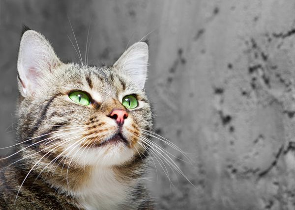 1000 Images About Cat Stuff On Pinterest Cat Health