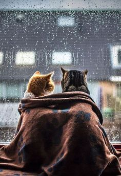 Two cats cuddling by the window on a rainy day