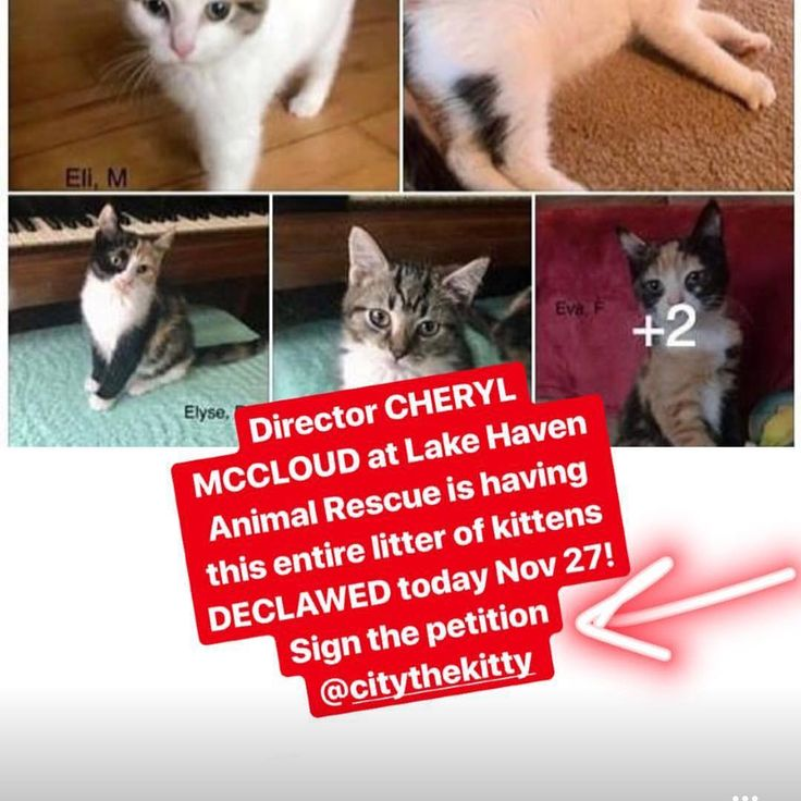 PLEASE PLEASE PLEASE SIGN THIS PETITION TO STOP THIS BARBARIC PRACTICE THAT LAKEHAVENRESCUE.ORG IS DOING ON ALL ITS KITTENS BEFORE ADOPTING THIS OUT. The link is show in this #repost of @citythekitty . You can read in my previous repost some of the feedback that is happening already. ONE OF THE SPONSORS BISSELL HAS ALREADY BEEN CONTACTED AND THEY HAVE CHANGED THEIR POLICIES ON FUNDING BECAUSE OF THE DECLAWING. PLEASE ADD YOUR NAME TO THE PETITION PLEASE EMAIL THEM PLEASE CHECK OUT THEIR VET…