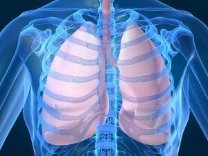 Below is a list of herbs that can not only boost lung and respiratory health but can also repair it. Herb information is courtesy of John Summerly who is nutritionist, herbologist, and homeopathic practitioner. 1. Licorice Root Licorice...etc