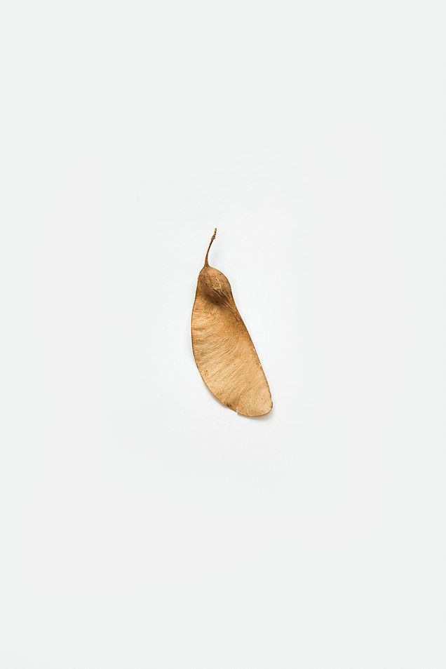#photography | #nature | #LW | #seed | #nude | #minimal | www.l-w.co.za | @_lw_photography Instagram