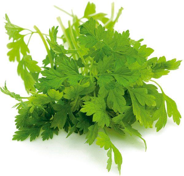 Trebuľka (Anthriscus cerefolium) Využitie Používame predovšetkým čerstvé mladé…