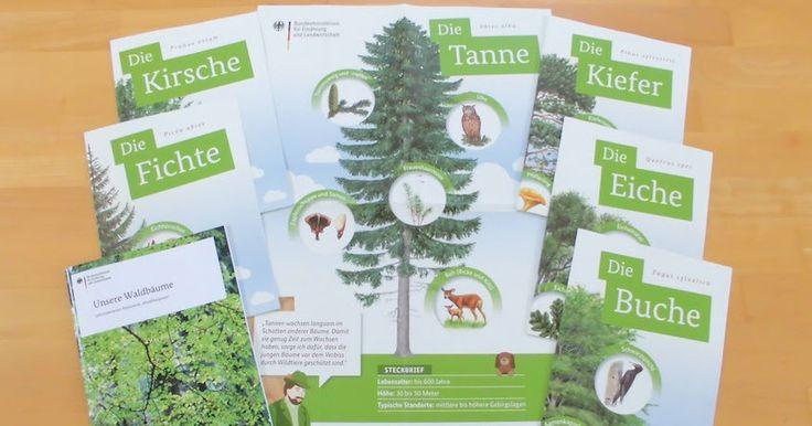 Kostenlose Poster zum Thema Wald in der Grundschule