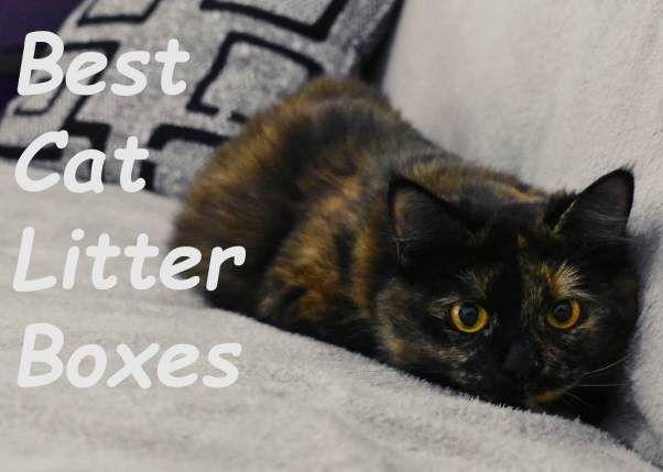 5 Best Cat Litter Boxes For Odor Control 2020 Best Cat Litter