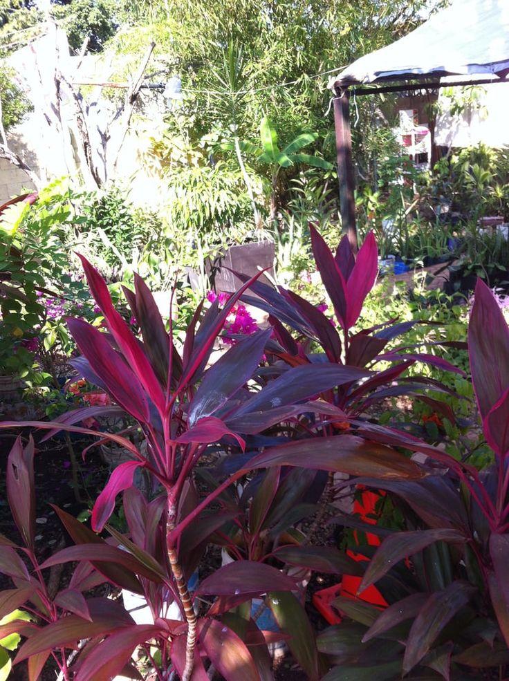 Resultado de imagen para plantas de sombra