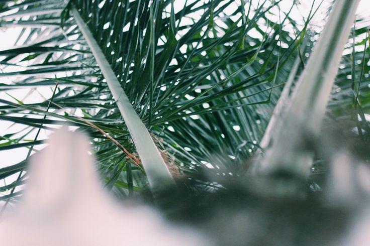 Palm tree | leeroyesbend | VSCO Grid®