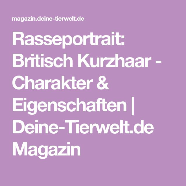 Rasseportrait: Britisch Kurzhaar - Charakter & Eigenschaften | Deine-Tierwelt.de Magazin