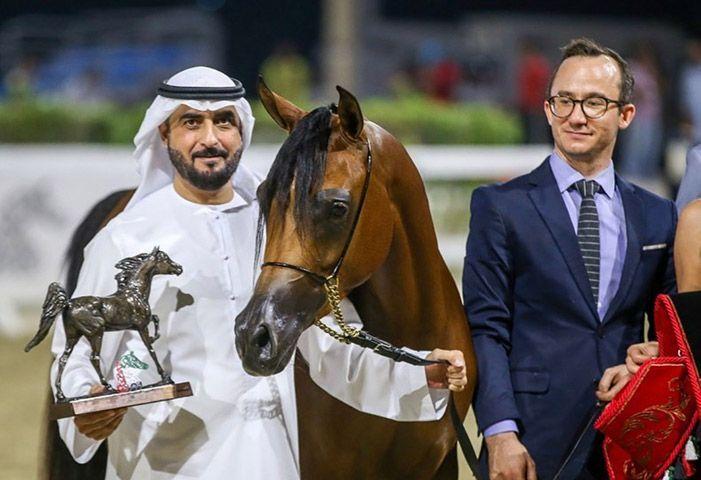 رانيا البداير تحصل على برونزية المهرات ببطولة الشارقة ٢٠١٩ للإنتاج المحلي Arabian Horse Horses Riding Helmets