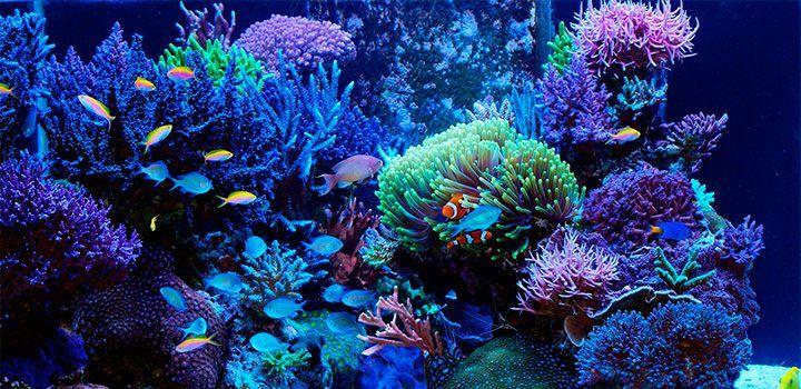Limpeza de aquários de água salgada