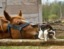 humour cheval chat