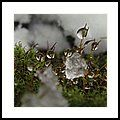 Beauty In Snow Showers Framed Print