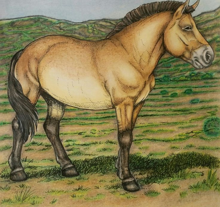 Dover coloring book: John Green  Horses of the  world #adultcoloringbook  #john green  #dovercoloringbook