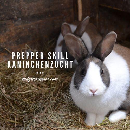 Prepper Skill - Kaninchenzucht
