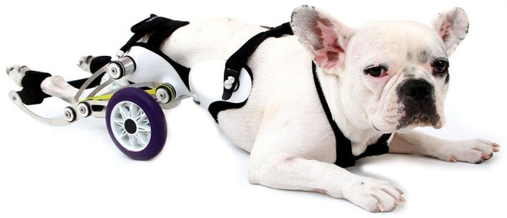 amigo dog wheelchair designed by nir shalom - I love that it is designed to allow the dog to lay down as well.