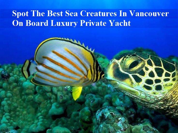 Spot The Best Sea Creatures In Vancouver On Board Luxury Private Yacht         #bestsea #sea #seacreatures #vancouver #board #luxury #private #yacht #luxuryprivateyacht