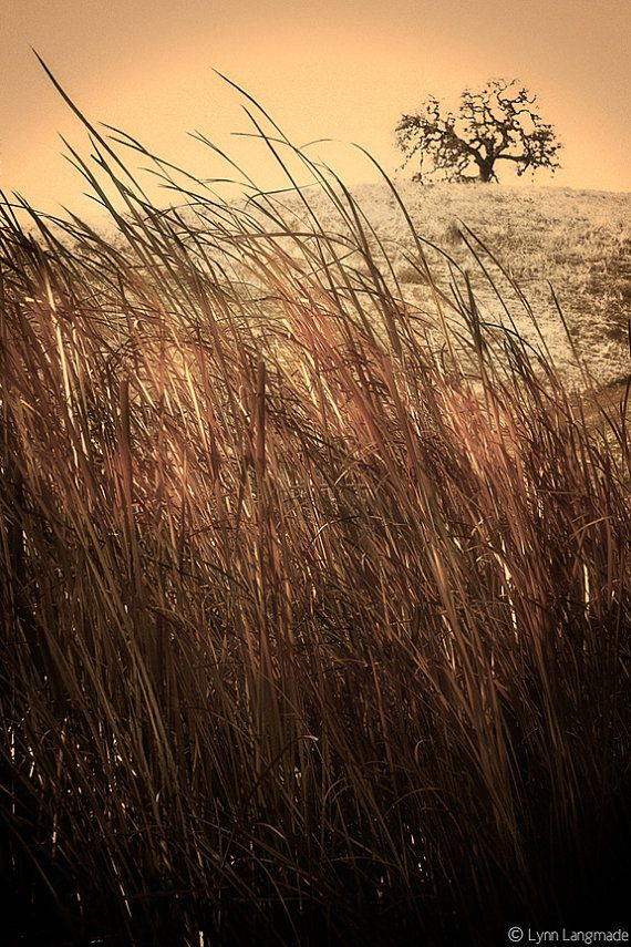 Hey, I found this really awesome Etsy listing at http://www.etsy.com/listing/163169701/nature-photography-grass-photograph