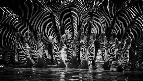 Grand soif by Laurent Baheux on 500px