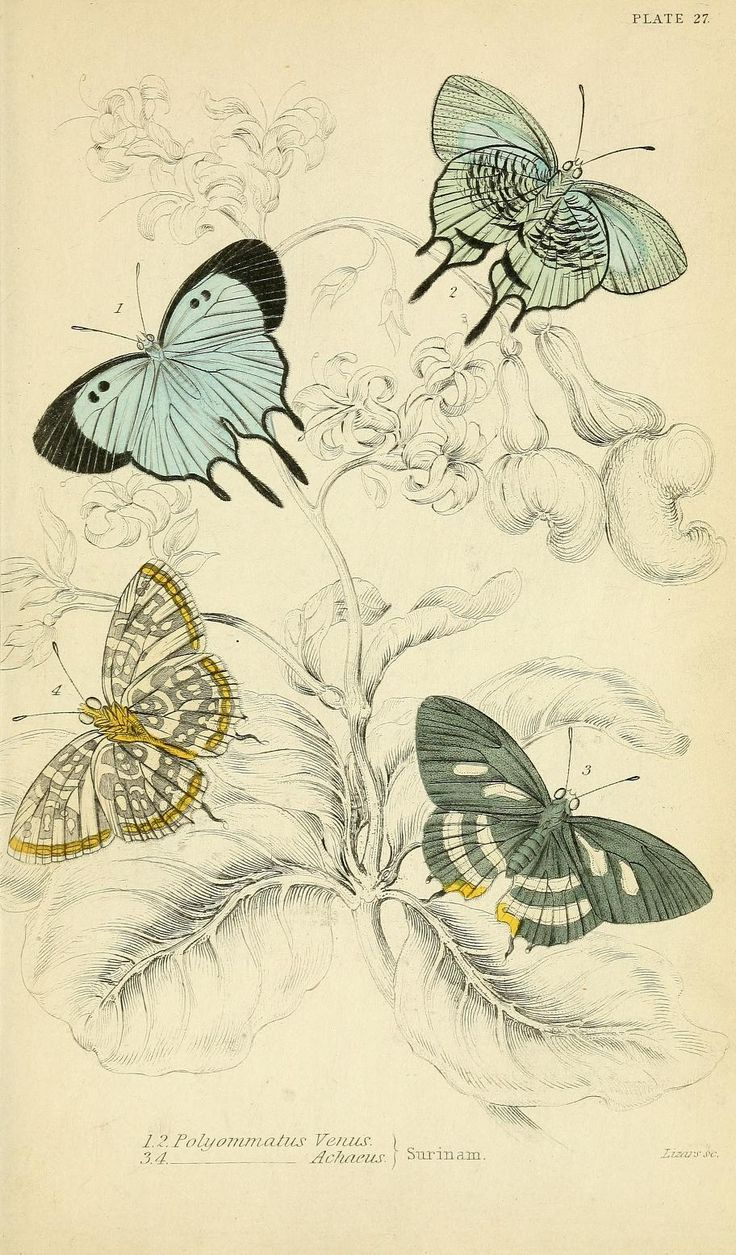 17 best images about animals in art insects foreign butterflies biodiversity heritage library