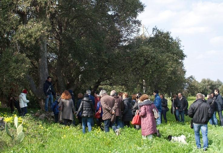 Piccola sosta per conoscere le caratteristiche di una quercia da sughero.    Per saperne di più su questo evento, visitate il nostro portale: http://www.pugliaevents.it/it/gli-eventi/ipogea-viaggio-nel-mondo-dei-frantoi-ipogei