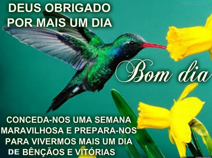 47 Best Images About Bom Dia!!! On Pinterest