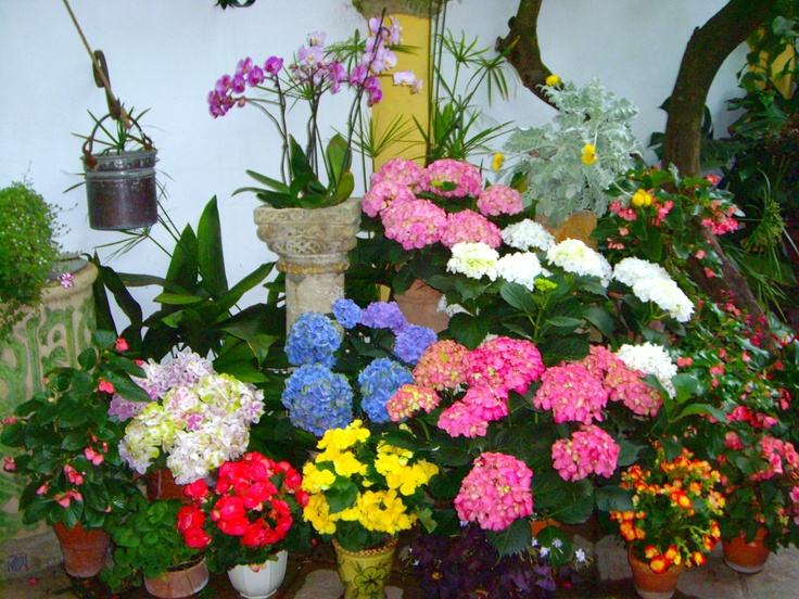 Patios 2012   Flowers Galore II