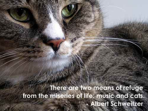 """""""There are two means of refuge from the miseries of life: music and cats."""" - Albert Schweitzer #cats #pets #life"""