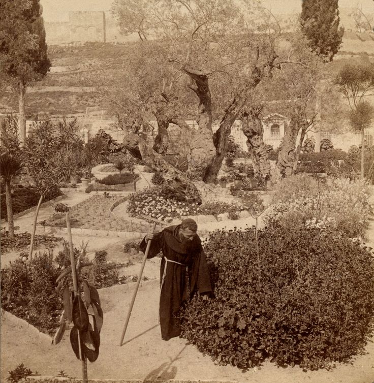 328 best images about world history 1900 to 1929 on for Age olive trees garden gethsemane