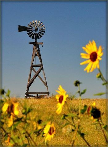 Windmill and sunflowers