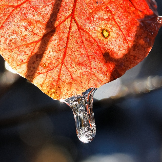 Frozen leaf: Rockin Photo, The Rock
