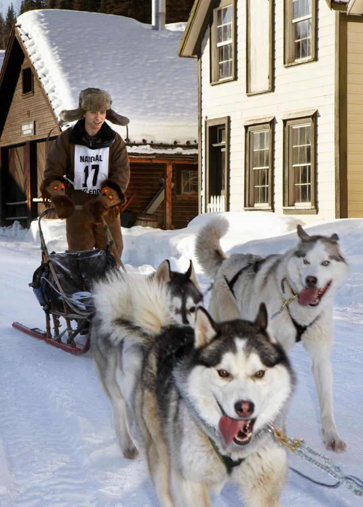 The Dogsled Mail Run, an annual Cariboo event, will celebrate its 20th anniversary January 20-22, 2012. Sledders sworn in as Canada Post mail carriers will carry close to 3,000 Mail Run envelopes