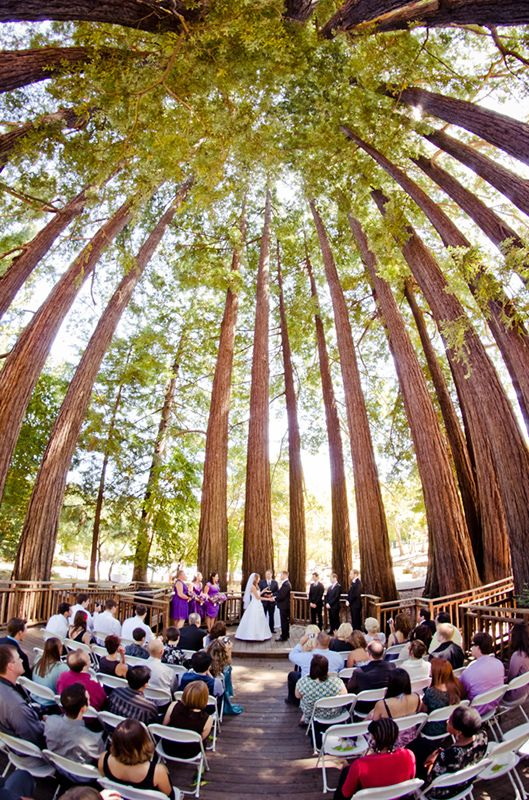 beautiful sequoia grove in sanborn park saratoga ca